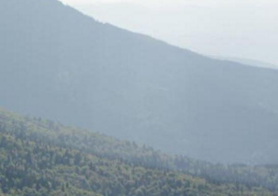 Ляшко предлагает Евросоюзу скупить украинский лес »