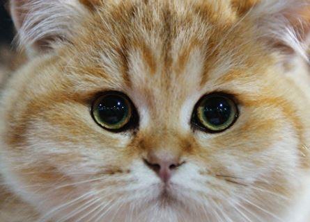 В Карелии из-за кота свыше 2000 человек остались без света »