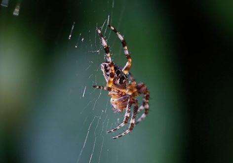 В Австралии мальчик смог выжить после укуса самого ядовитого паука на планете »