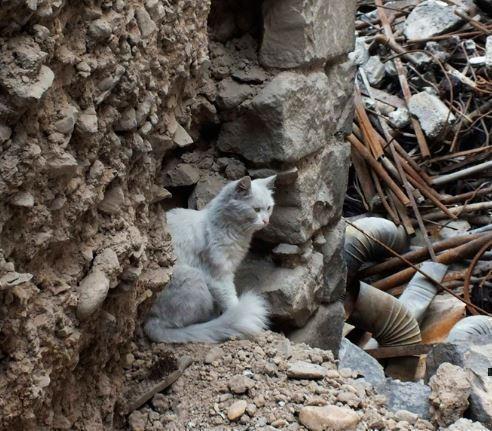 Турецкий солдат в Сирии спас бездомного кота »