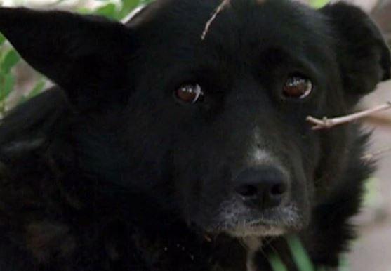 В Петрозаводске из-за кошки бродячие собаки чуть не сьели новую иномарку »