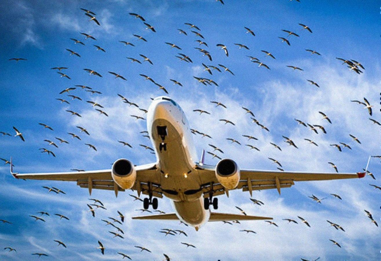 Турецкий самолет, атакованный птицами, вернулся во Внуково