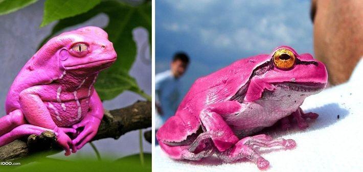 15 самых редких и очень красивых животных со всего мира