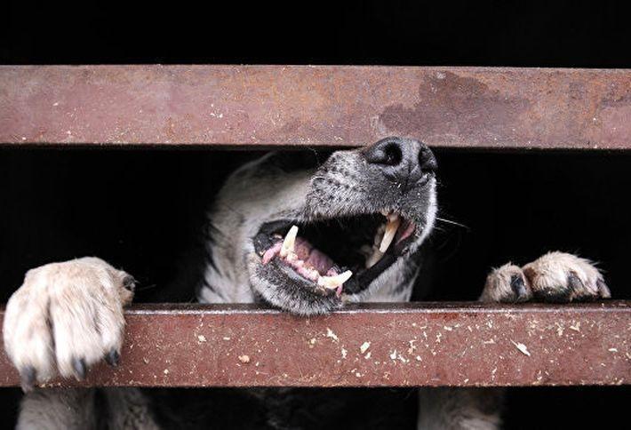 В Подмосковье пес насмерть загрыз пожилую женщину