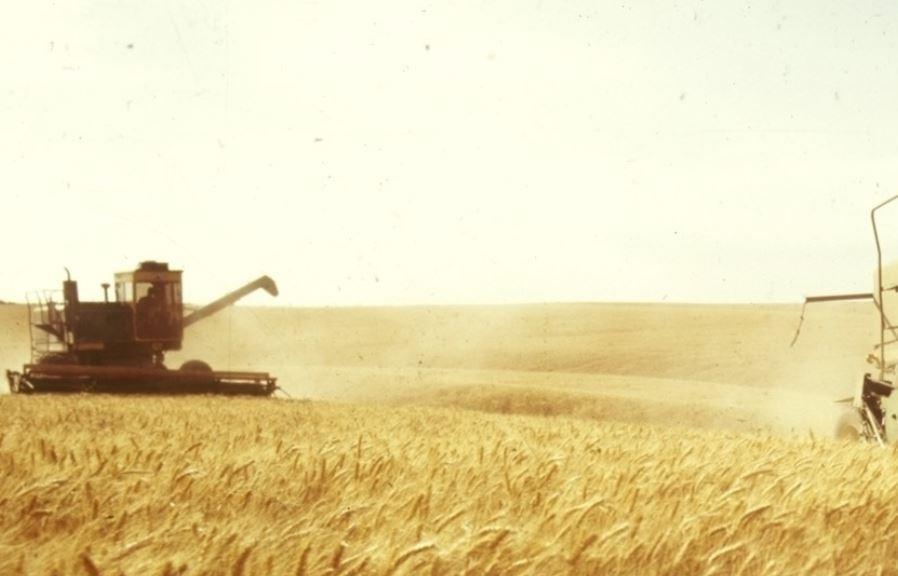 BFM TV: «зерновой» прорыв РФ не даёт покоя зарубежным конкурентам