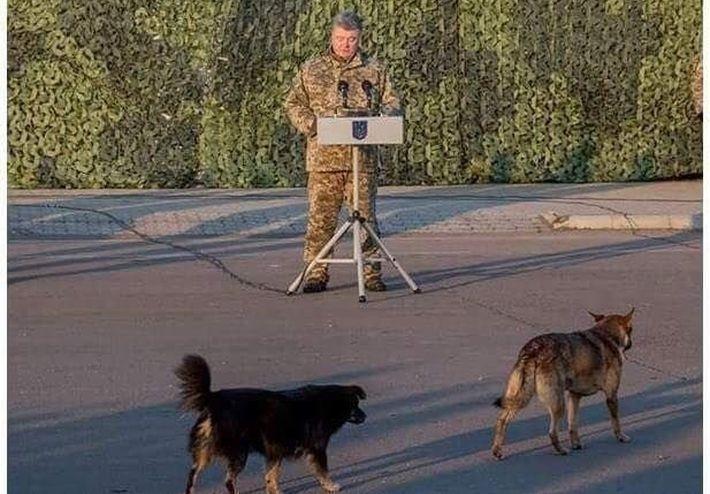 Порошенко выступил с речью перед двумя собаками