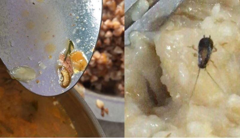 На Украине будущим летчикам подают еду с личинками и тараканами