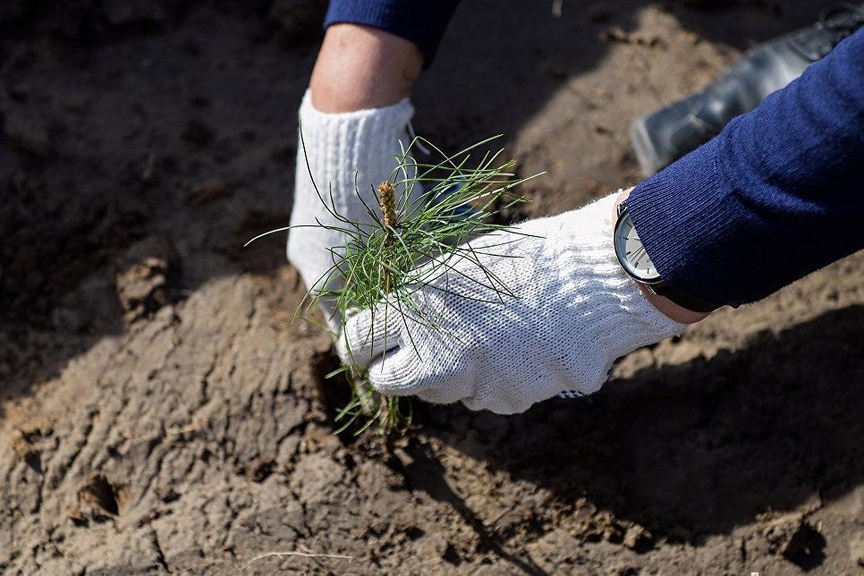 Минприроды опубликовало экологический рейтинг городов России