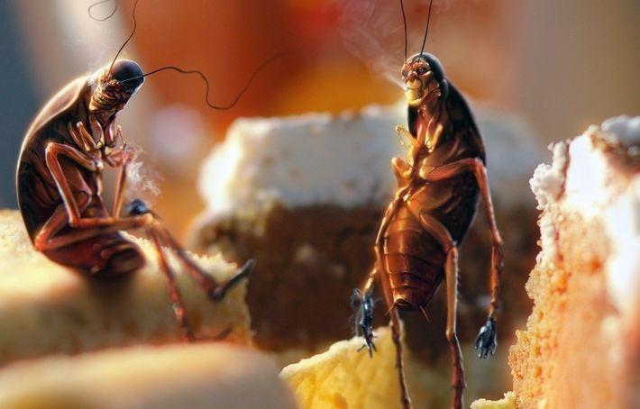 В Финляндии начинают продавать хлеб из насекомых
