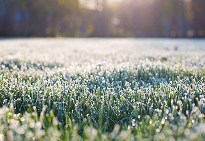 МЧС: в Московской области ожидаются заморозки