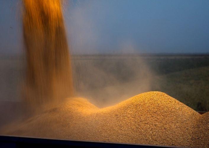 Учёные рассказали, как глобальное потепление повлияет на урожаи