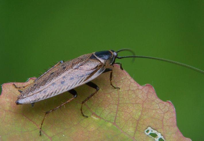 Ростов-на-Дону заполонили огромные черные тараканы