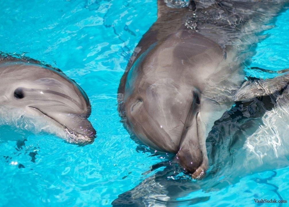 В Одессе во время представления родился дельфиненок. Видео