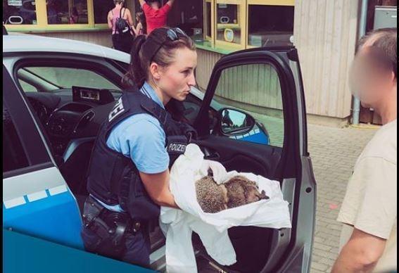 В Германии полиция чудом спасла пьяных ежей