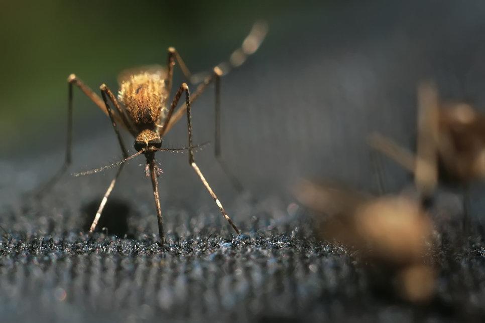 После укуса комара под кожей лица у россиняки поселился червь