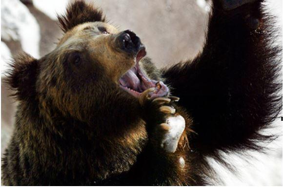 Японец сразился с медведем и заставил его убегать