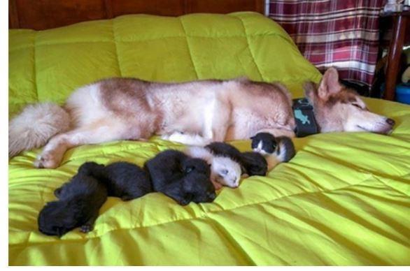 Собака смогла спасти от смерти 7 брошенных котят