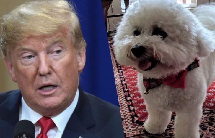 """Американский конгрессмен унизил Трампа, назвав """"пуделем Путина"""""""