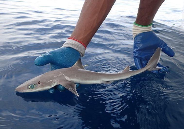 В Америке обнаружили новый вид акул, похожих на героев из аниме