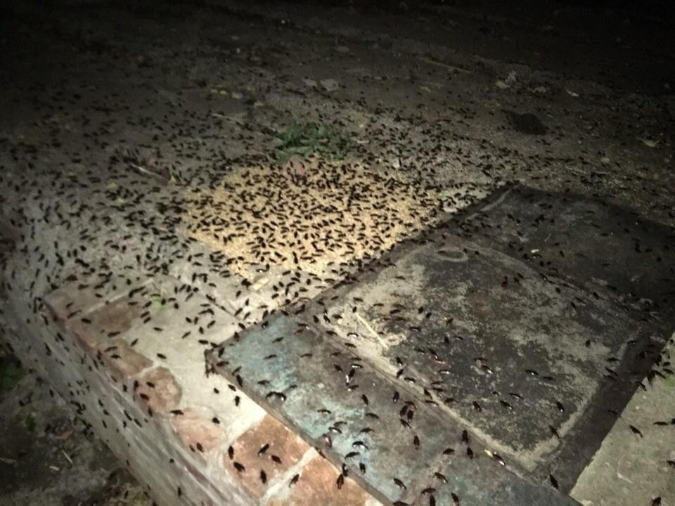 Канализационнеы тараканы заполонили подъезды в Казани. Видео