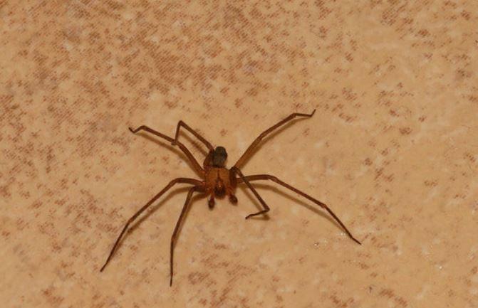 Американка потеряла ногу после укуса паука