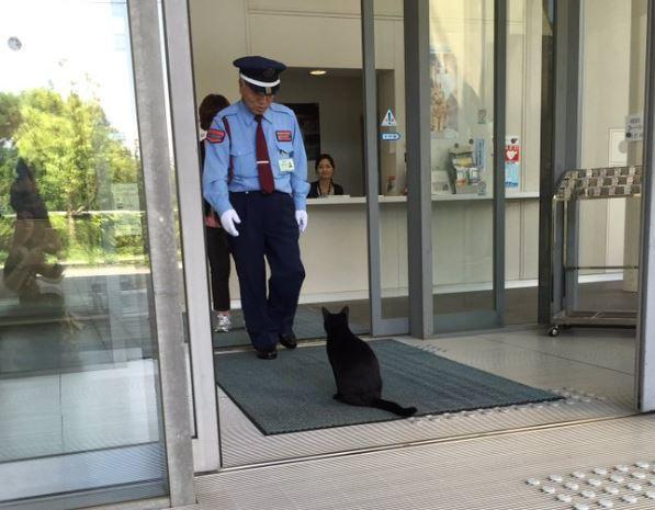 В РФ приглашают 2х японских котов, которых не пускают в местные музеи