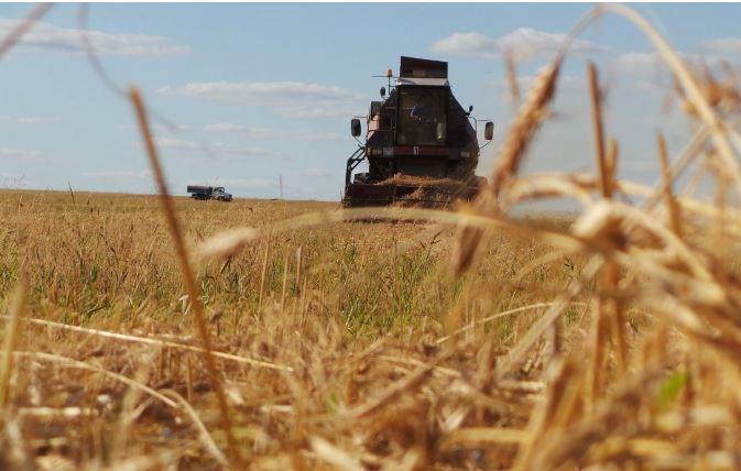 Убийственно для ЕС и США: эксперт прокомментировал выход российского зерна на новые рынки Африки