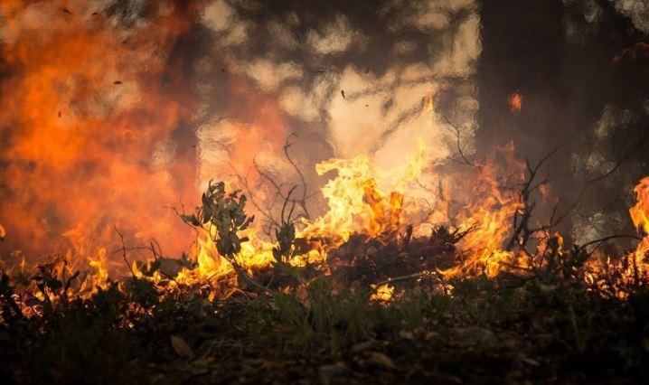 В Ленинградской области подросток спас лес и детей от огня
