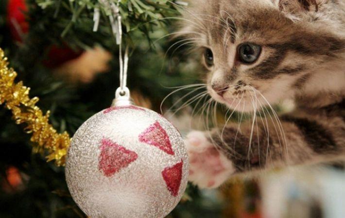 10 способов защитить ёлку от кошки