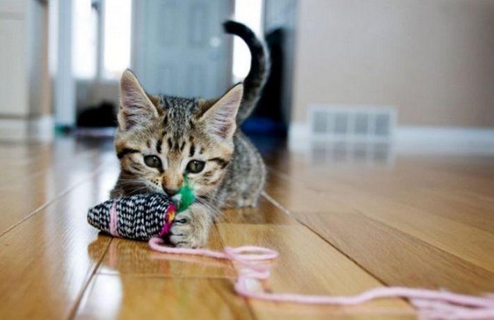 10 лайфхаков, чтобы найти общий язык с кошкой