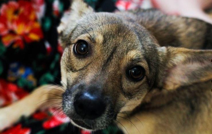 Ученые поведали, как собаки научились манипулировать людьми