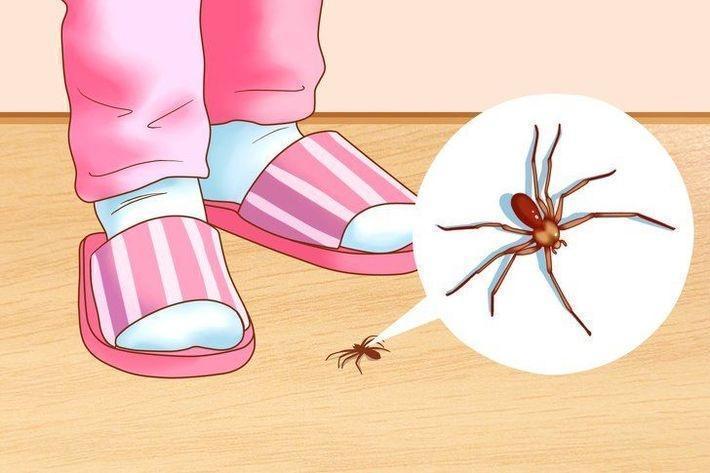 6 эффективных способов избавления от насекомых в доме
