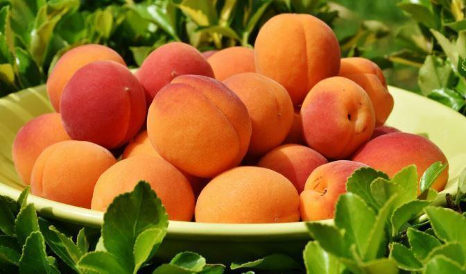 Диетолог рассказала об опасности персиков и абрикосов для некоторых людей 1