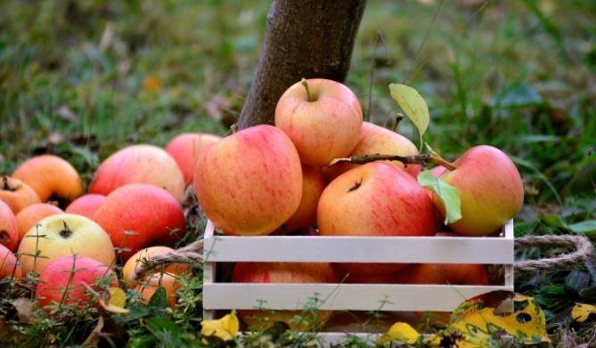 Китайские врачи развеяли миф о стопроцентной пользе яблок 1
