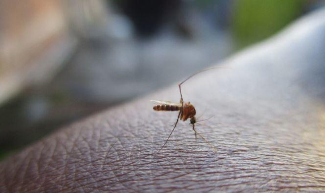 Ученые предупредили о смертельной опасности укусов комаров 1