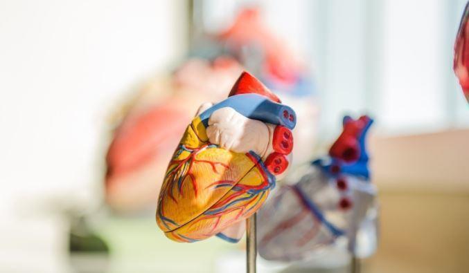Российские ученые совершили прорыв в изучении опасной патологии сердца 1