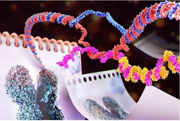 Обнаружена препятствующая старению молекула 1