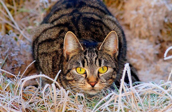 Ученые назвали животных, которые могут заразиться COVID-19