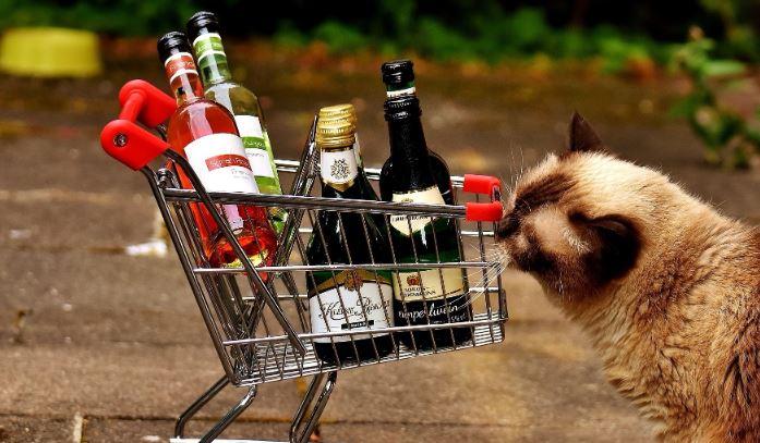 Зарубежные ученые рассказали, кто легче всех переносит алкоголь