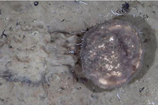 Ученые совершили неожиданное открытие в глубинах океана