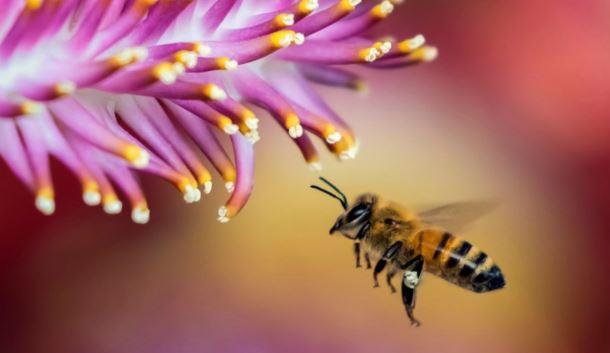 Нидерландские ученые выявили у пчел способность распознавать коронавирус
