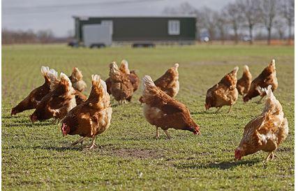 В США решили спасти планету продажей дорогих яиц