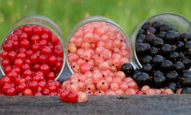 Врачи назвали помогающую эффективно бороться со старением ягоду