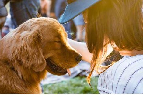 В помощь пострадавшим от обрушения дома в Майами прислали «лечебных» собак