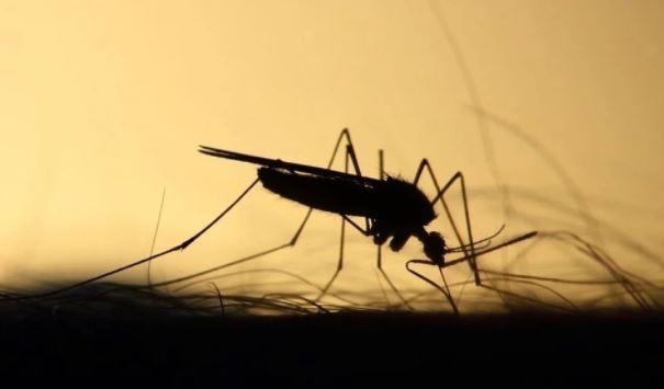 Россиянам назвали случаи, когда укус комара способен отправить в больницу